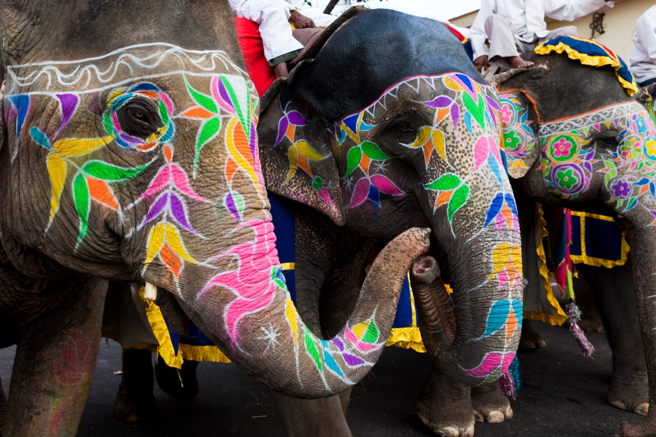 Elephant festival in Jaipur, India, Karma Group